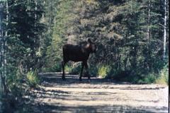 Anchorage-Homer-1987-029