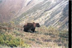 Denali-Mtn-8-21-87-032