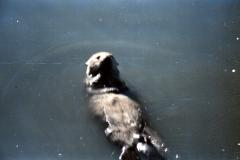 Valdez-NLights-1987-020