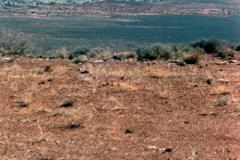 Canyonlands-85-1-335