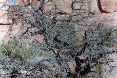 Canyonlands-86-2-025