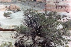 Canyonlands-86-2-029