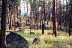 Devils-Tower-2000-012