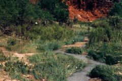 Palo-Duro-5-27-91-005