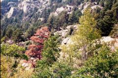 RMNP-2-2004-028
