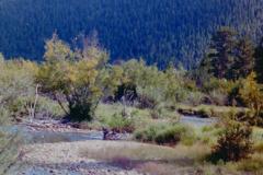 RMNP-2004-001-007