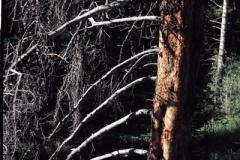 Rocky-Mountain-Hike-91-021