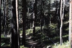 Rocky-Mountain-Hike-91-022
