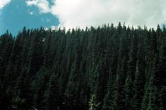 Trail-Ridge-Rd-Milner-Pass-9-91-016
