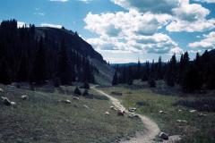 Trail-Ridge-Rd-Milner-Pass-9-91-017