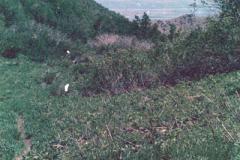 Wellsville-Hike-7-79-007