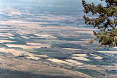 Wellsville-Hike-John-Hill-Flowers-7-19-86-12